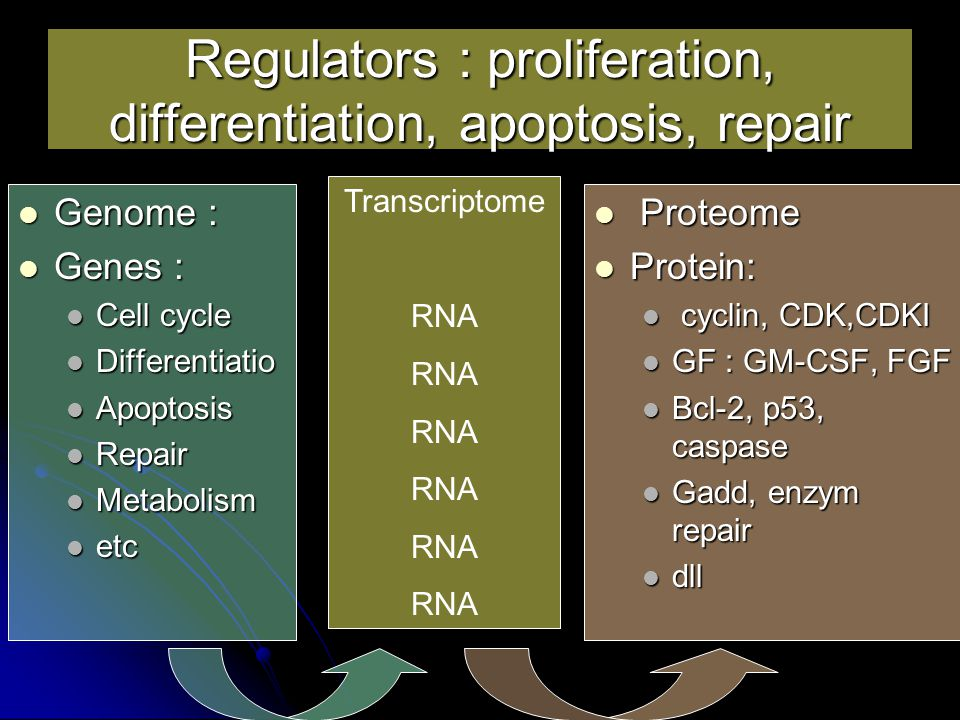 Regulators : proliferation, differentiation, apoptosis, repair
