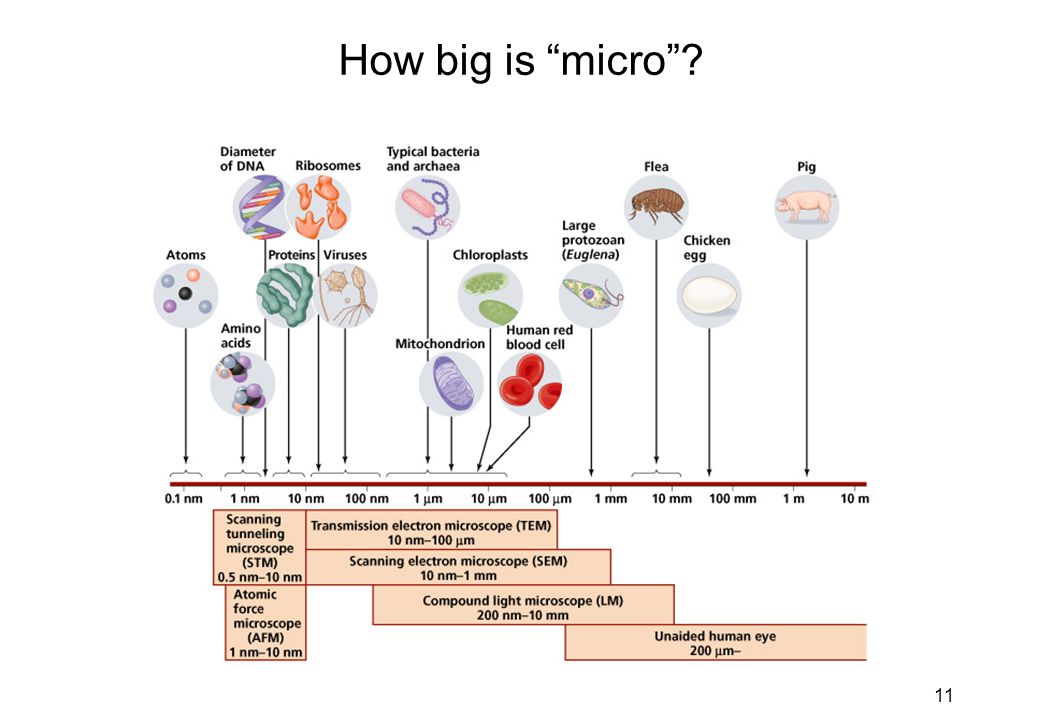 How big is micro Microbes cover a range of sizes
