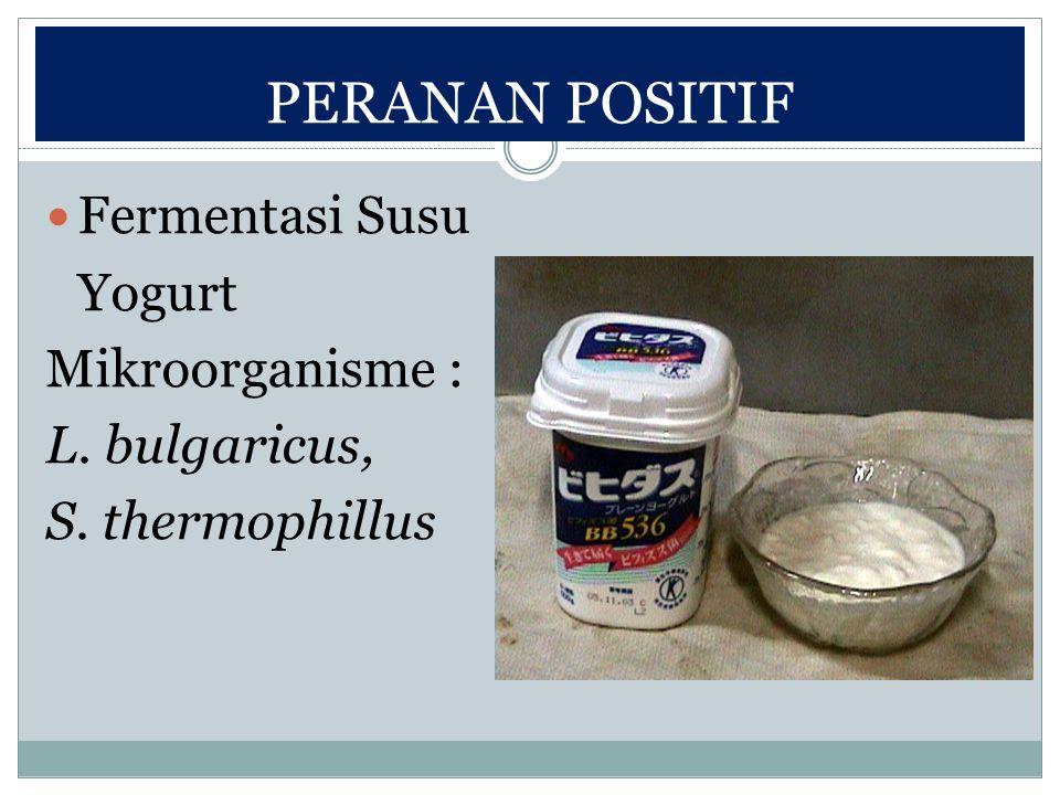 PERANAN POSITIF Fermentasi Susu Yogurt Mikroorganisme : L. bulgaricus,