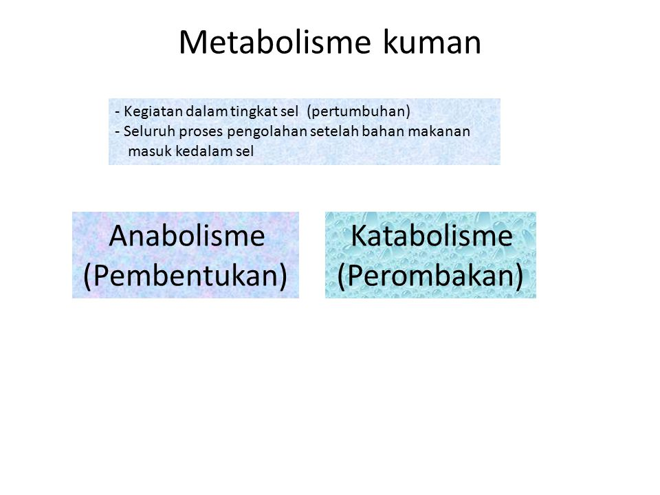 Katabolisme (Perombakan)