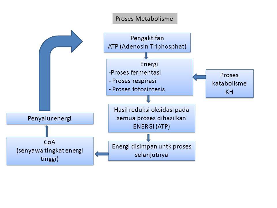 ATP (Adenosin Triphosphat)