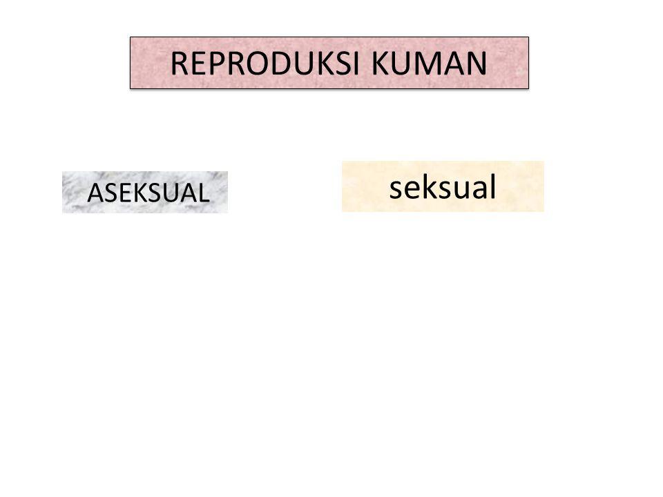 REPRODUKSI KUMAN seksual ASEKSUAL