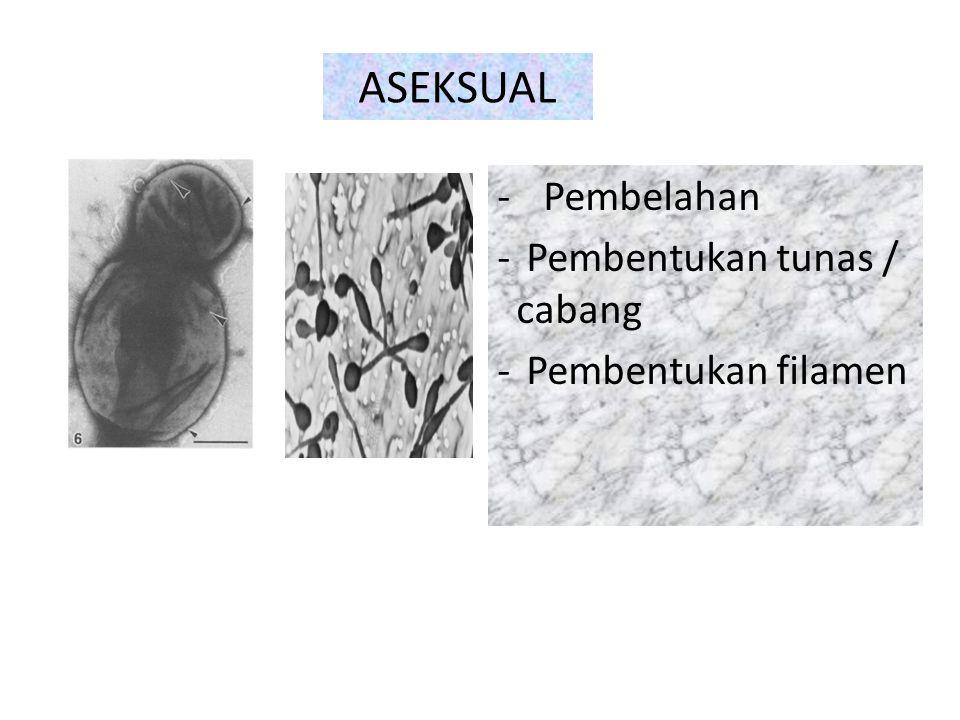ASEKSUAL Pembelahan Pembentukan tunas / cabang Pembentukan filamen