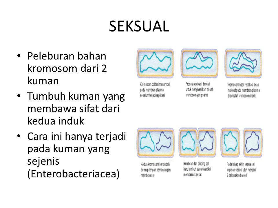 SEKSUAL Peleburan bahan kromosom dari 2 kuman