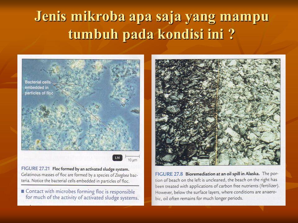 Jenis mikroba apa saja yang mampu tumbuh pada kondisi ini