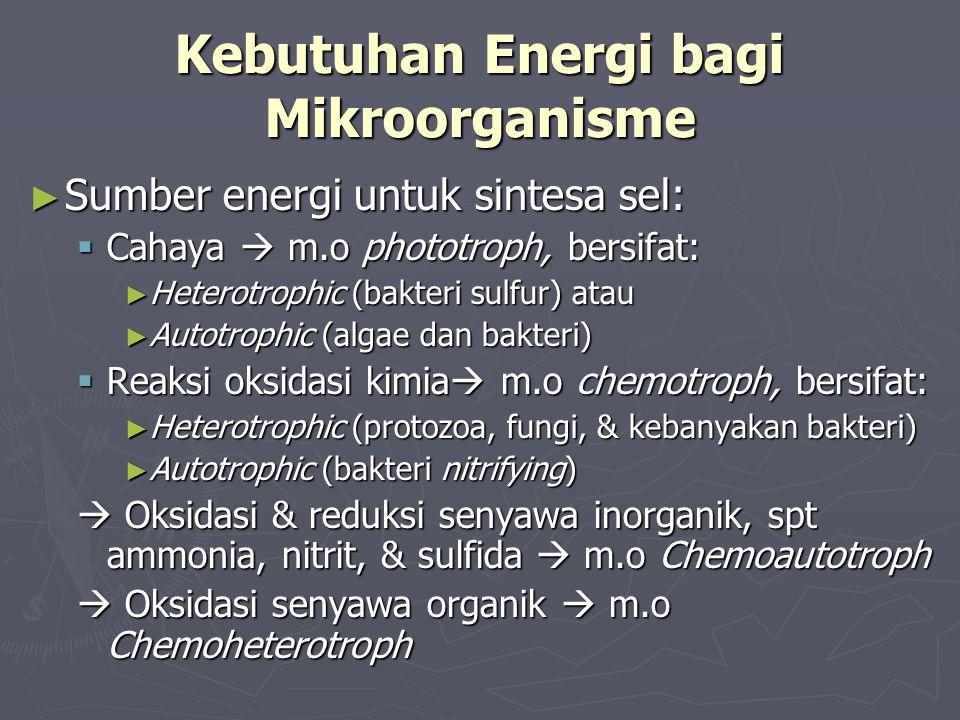 Kebutuhan Energi bagi Mikroorganisme