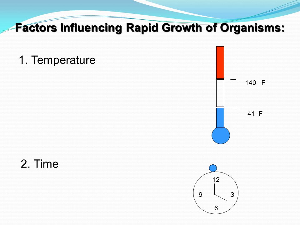 Factors Influencing Rapid Growth of Organisms: