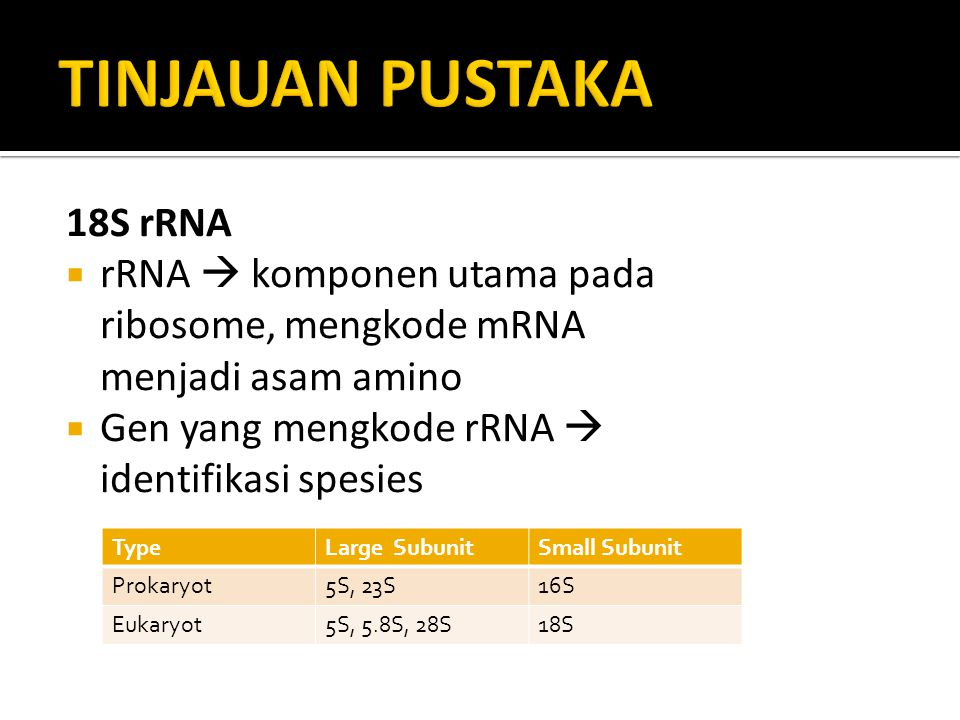 TINJAUAN PUSTAKA 18S rRNA