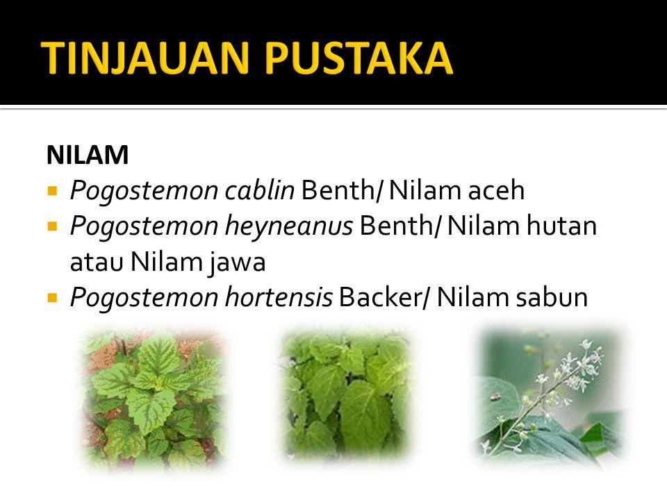 TINJAUAN PUSTAKA NILAM Pogostemon cablin Benth/ Nilam aceh