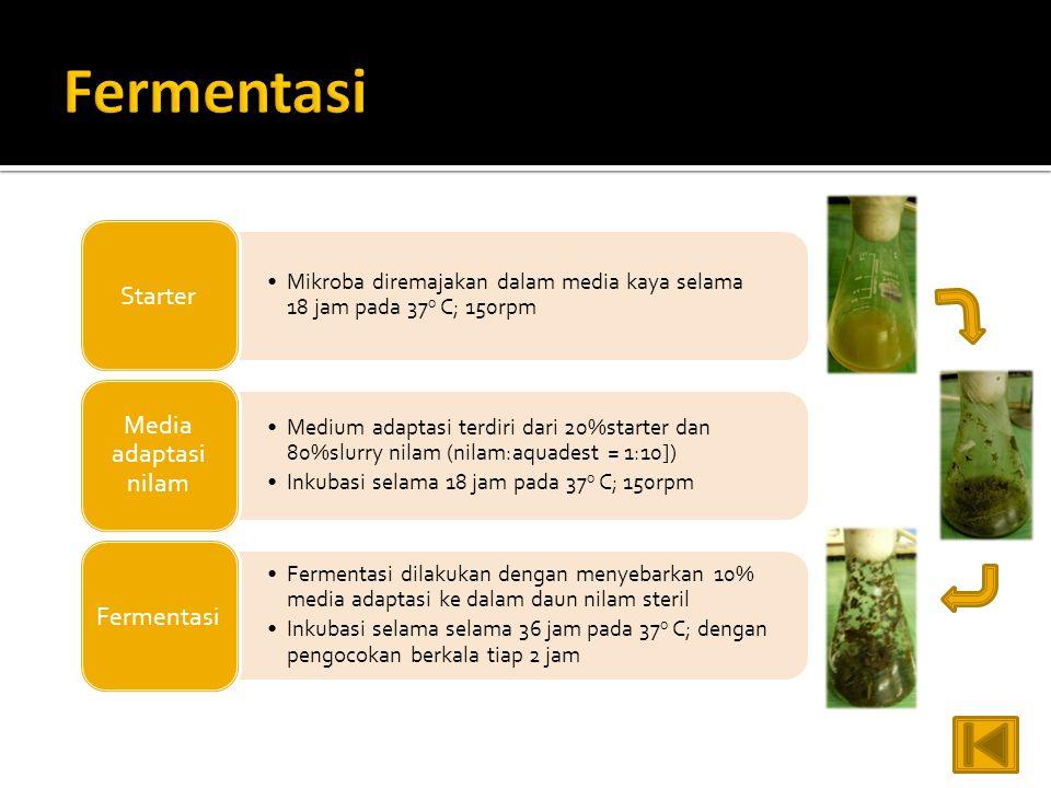 Fermentasi Starter. Mikroba diremajakan dalam media kaya selama 18 jam pada 37o C; 150rpm. Media adaptasi nilam.