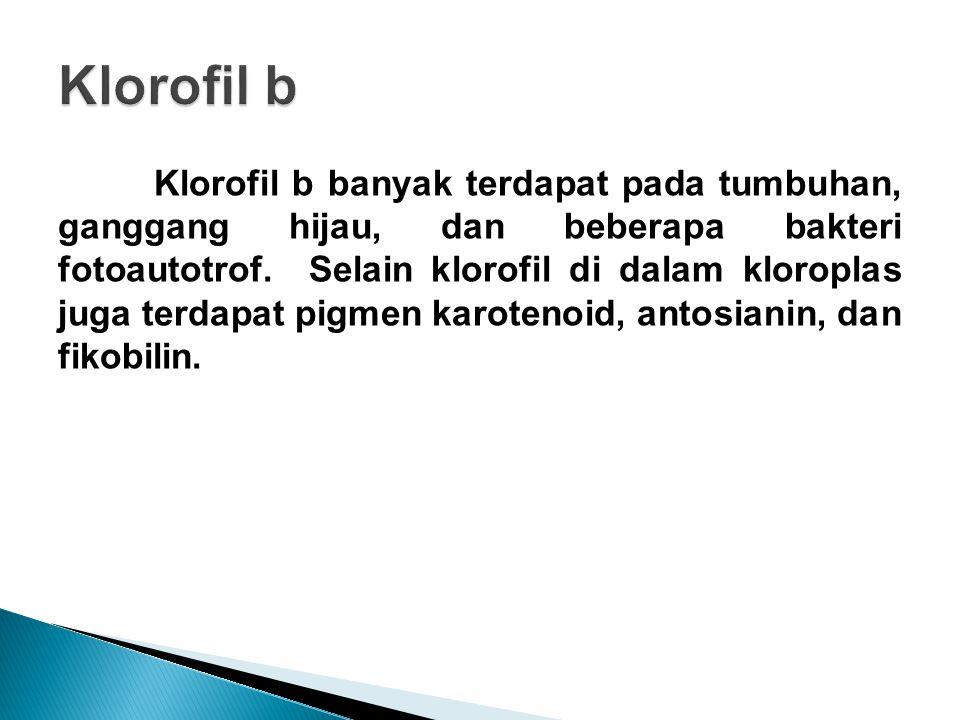 Klorofil b