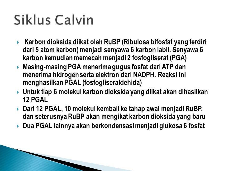 Siklus Calvin