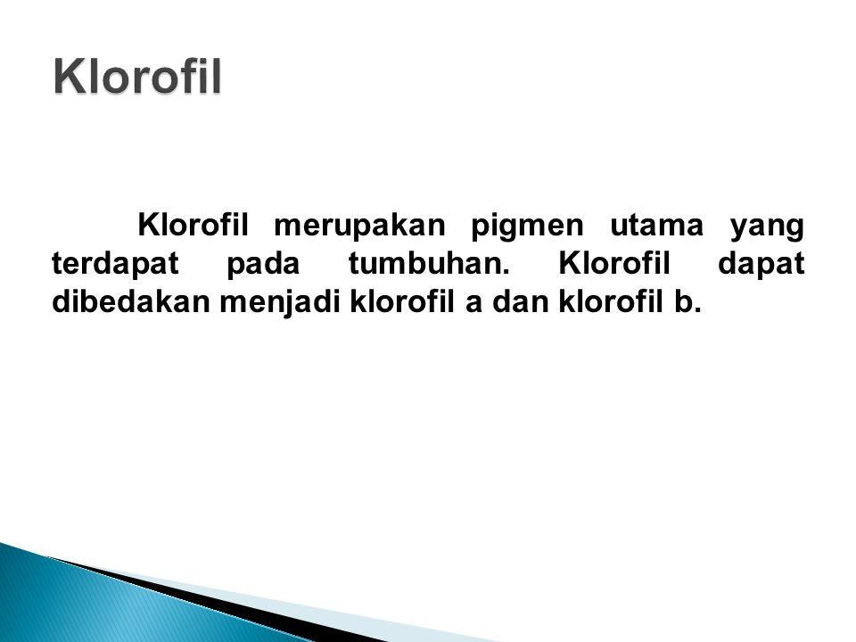 Klorofil Klorofil merupakan pigmen utama yang terdapat pada tumbuhan.