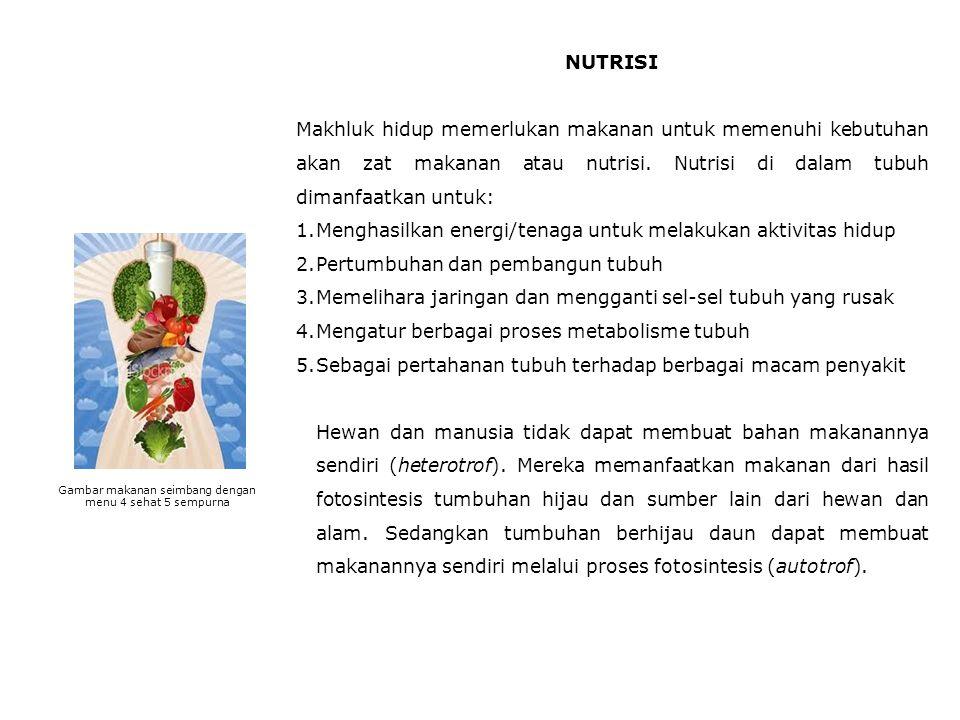 Gambar makanan seimbang dengan menu 4 sehat 5 sempurna