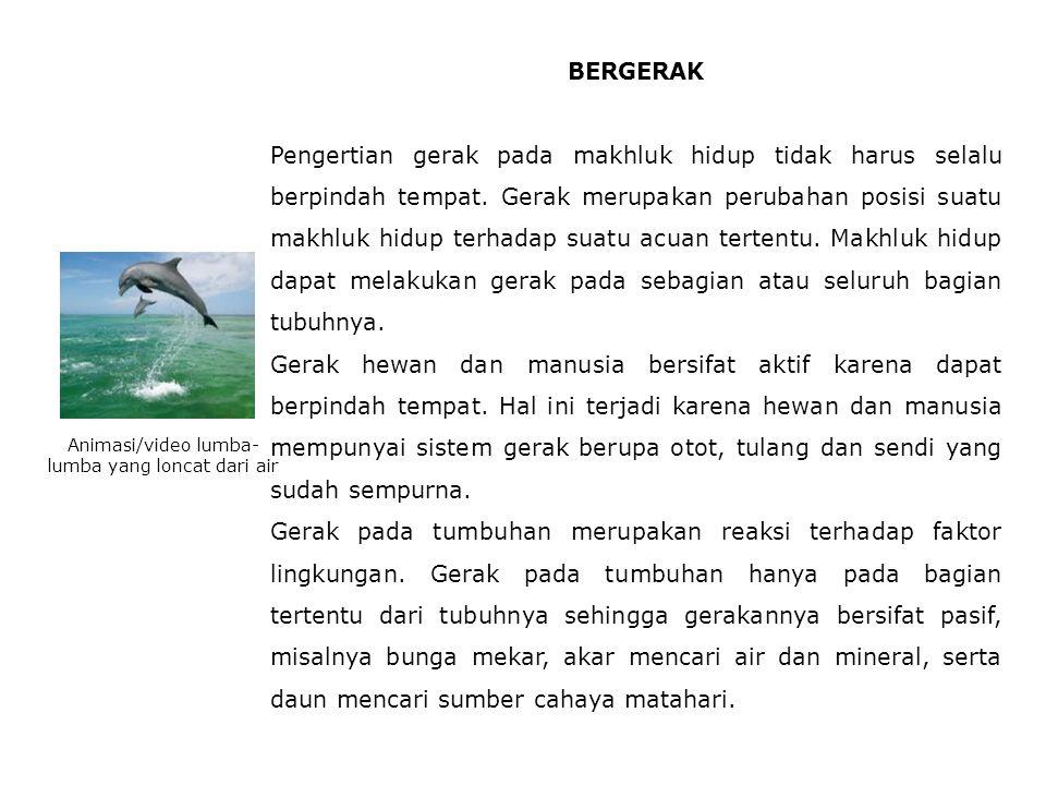 Animasi/video lumba-lumba yang loncat dari air