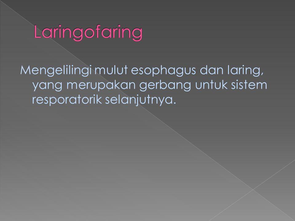 Laringofaring Mengelilingi mulut esophagus dan laring, yang merupakan gerbang untuk sistem resporatorik selanjutnya.