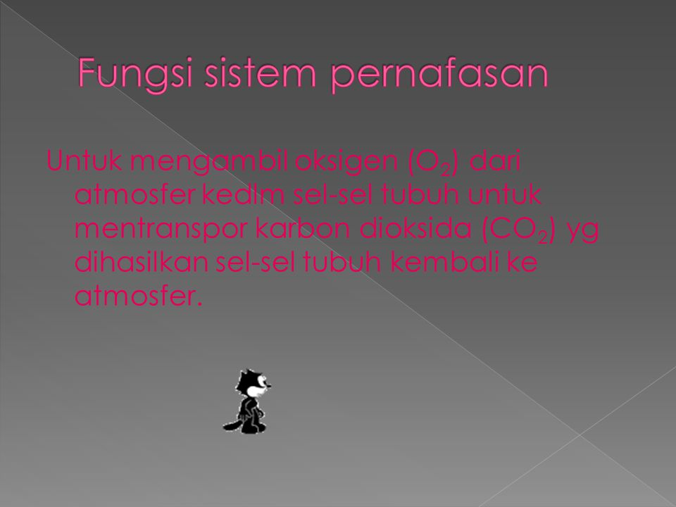 Fungsi sistem pernafasan