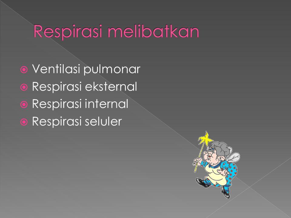 Respirasi melibatkan Ventilasi pulmonar Respirasi eksternal