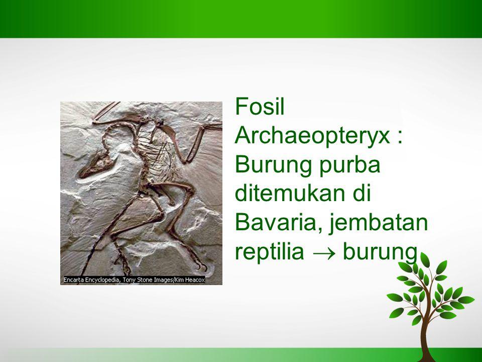 Fosil Archaeopteryx : Burung purba ditemukan di Bavaria, jembatan reptilia  burung