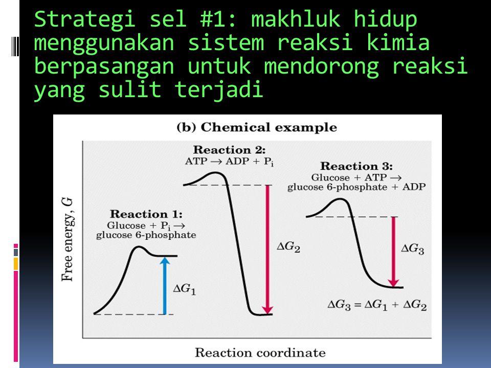 Strategi sel #1: makhluk hidup menggunakan sistem reaksi kimia berpasangan untuk mendorong reaksi yang sulit terjadi