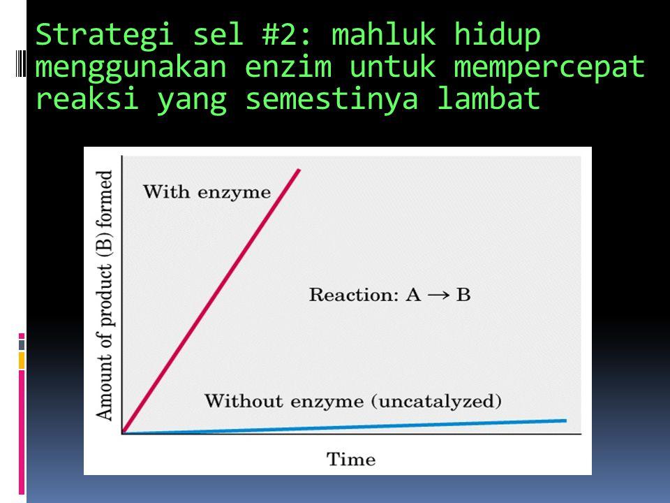 Strategi sel #2: mahluk hidup menggunakan enzim untuk mempercepat reaksi yang semestinya lambat
