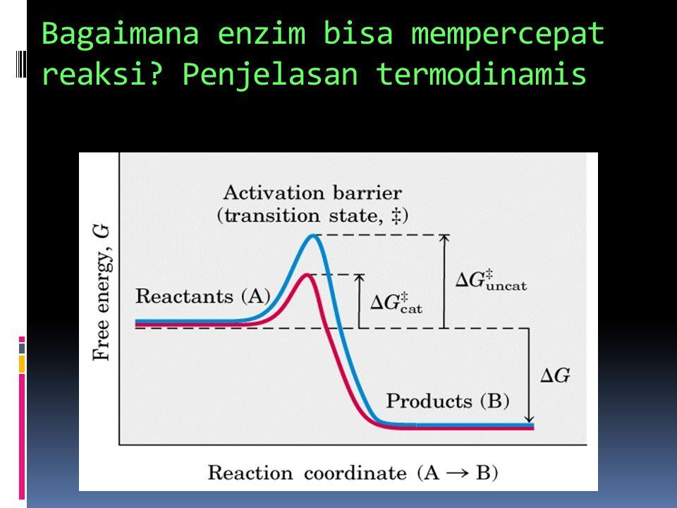 Bagaimana enzim bisa mempercepat reaksi Penjelasan termodinamis