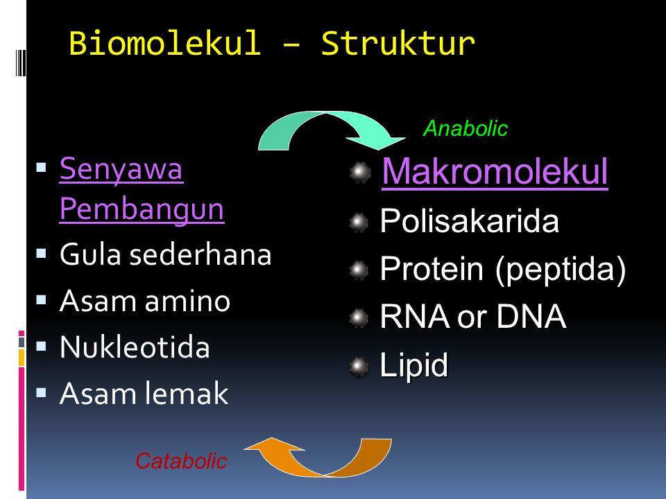 Biomolekul – Struktur Makromolekul Senyawa Pembangun Polisakarida