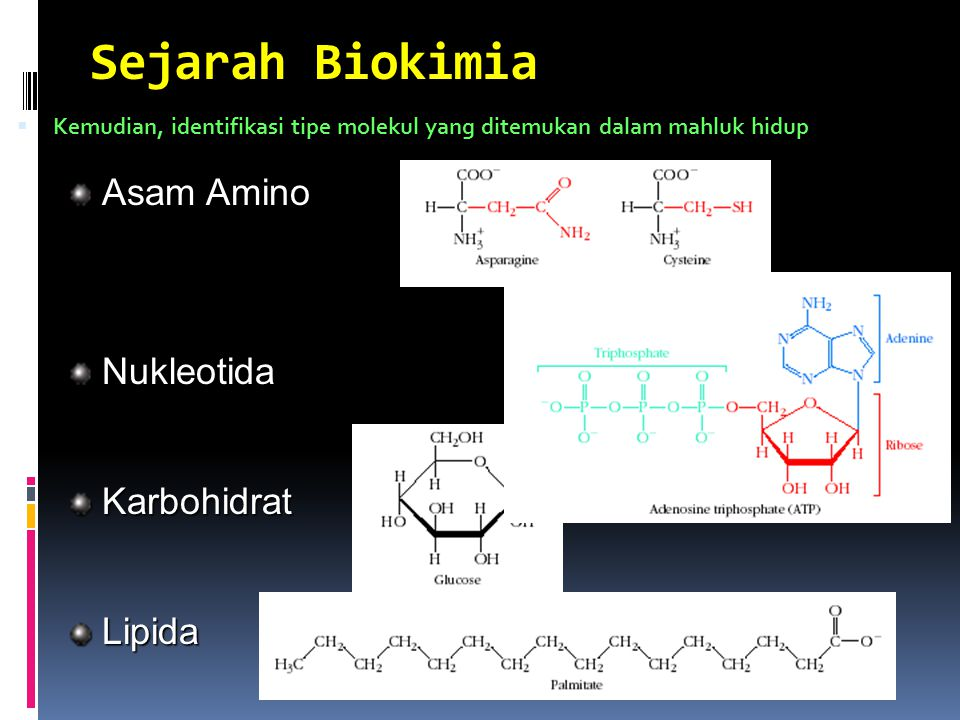 Sejarah Biokimia Asam Amino Nukleotida Karbohidrat Lipida