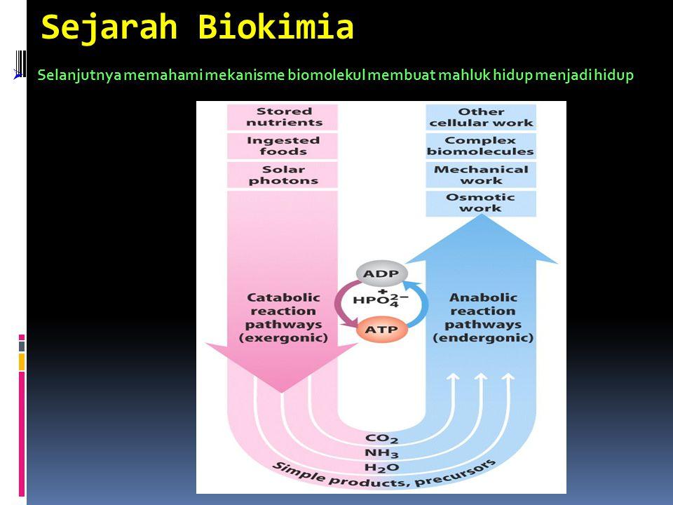 Sejarah Biokimia Selanjutnya memahami mekanisme biomolekul membuat mahluk hidup menjadi hidup
