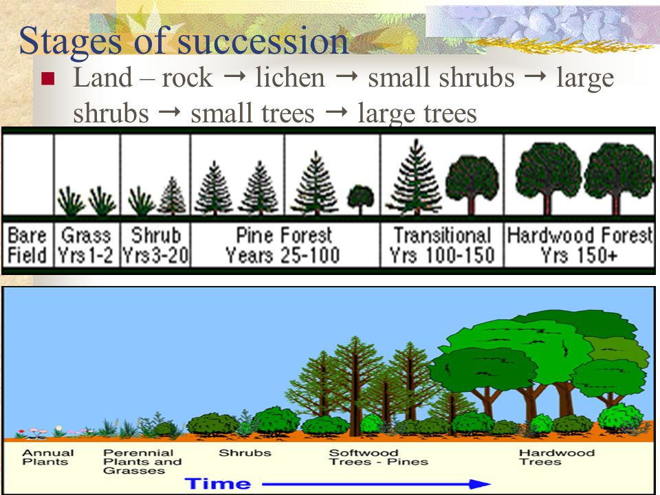 Stages of succession Land – rock  lichen  small shrubs  large shrubs  small trees  large trees