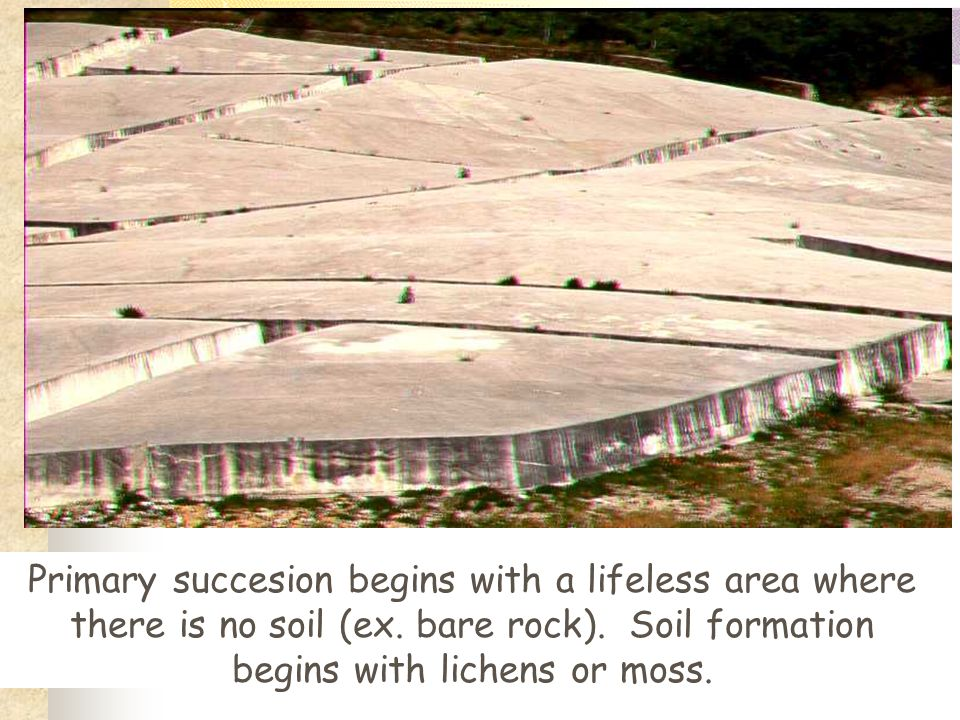 Primary succesion begins with a lifeless area where there is no soil (ex.