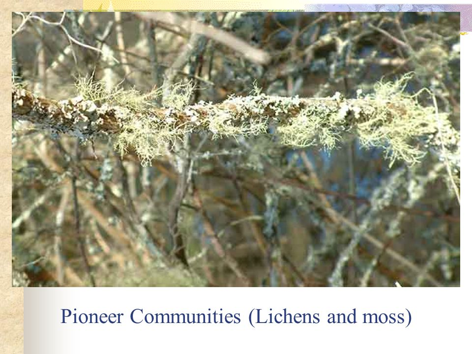 Pioneer Communities (Lichens and moss)