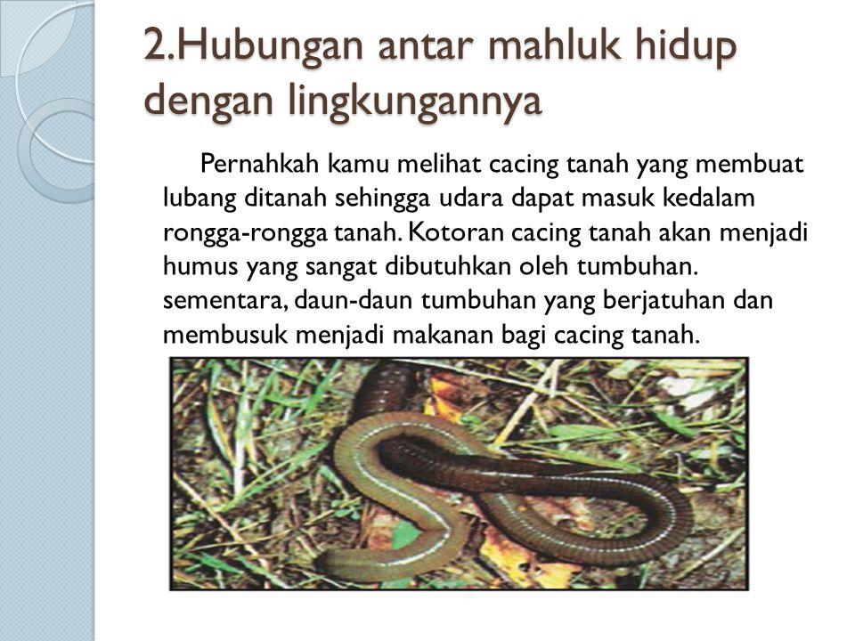 2.Hubungan antar mahluk hidup dengan lingkungannya