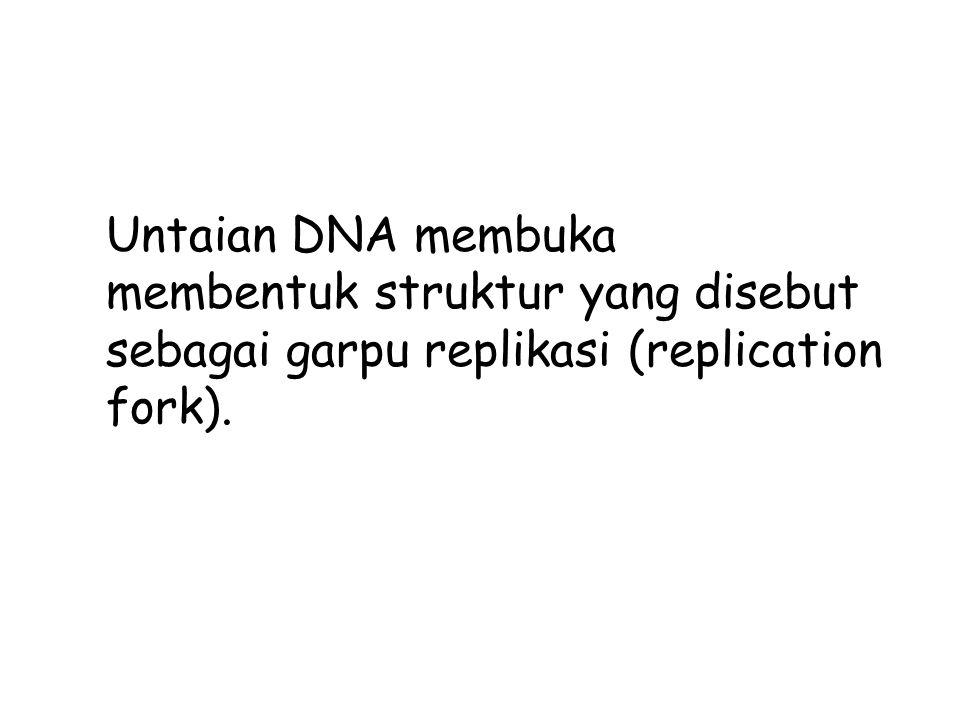 Untaian DNA membuka membentuk struktur yang disebut sebagai garpu replikasi (replication fork).