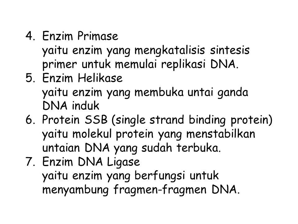 Enzim Primase yaitu enzim yang mengkatalisis sintesis primer untuk memulai replikasi DNA. Enzim Helikase.