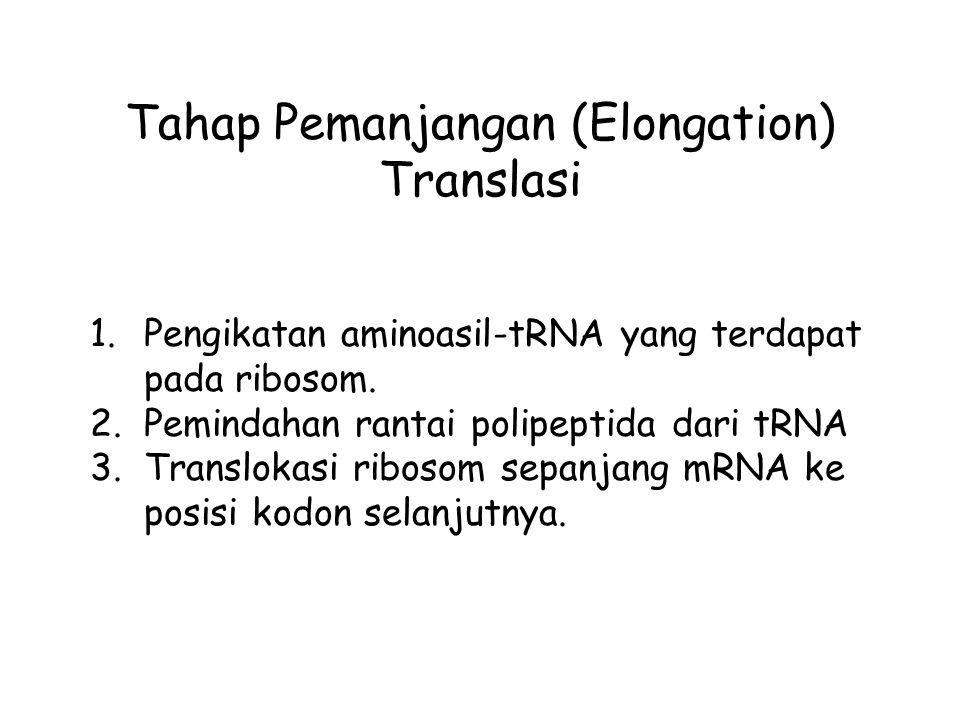 Tahap Pemanjangan (Elongation) Translasi