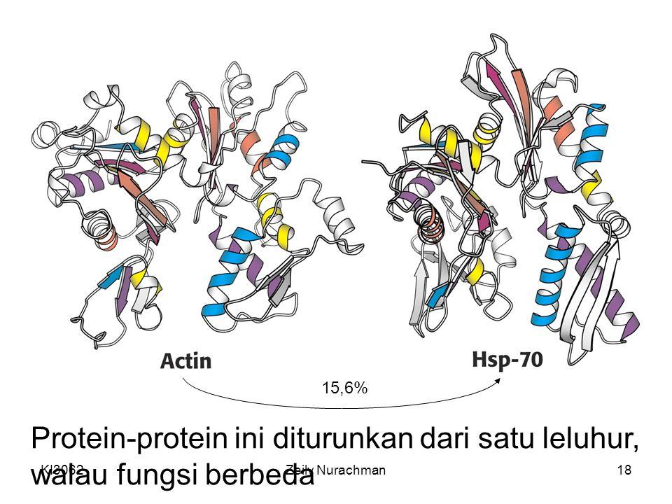Protein-protein ini diturunkan dari satu leluhur, walau fungsi berbeda
