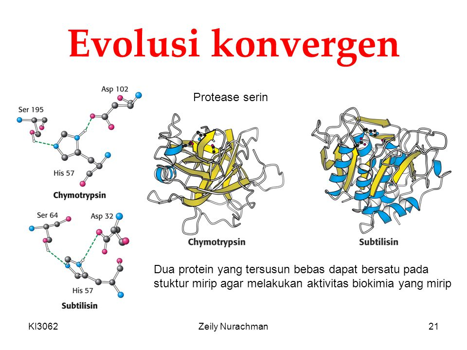 Evolusi konvergen Protease serin