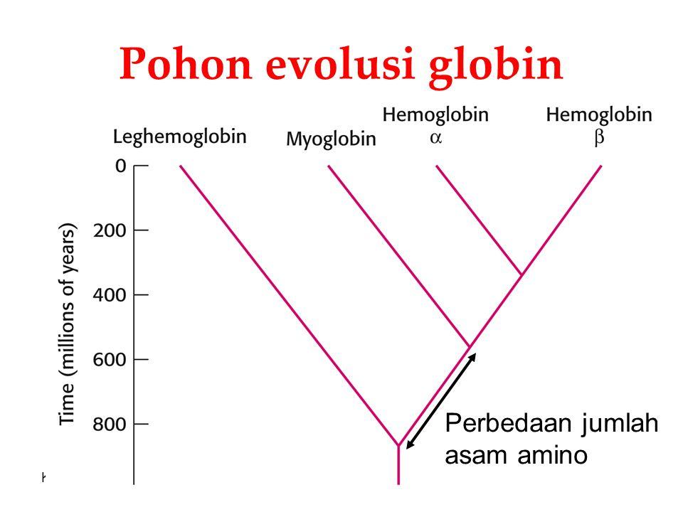 Pohon evolusi globin Perbedaan jumlah asam amino KI3062