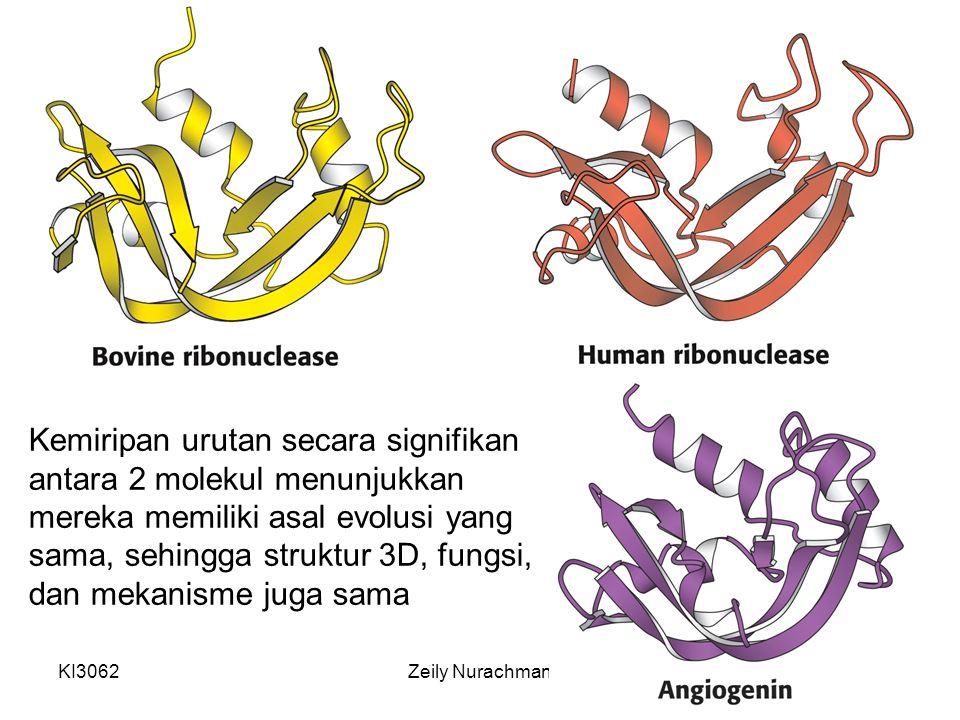 Kemiripan urutan secara signifikan antara 2 molekul menunjukkan mereka memiliki asal evolusi yang sama, sehingga struktur 3D, fungsi, dan mekanisme juga sama