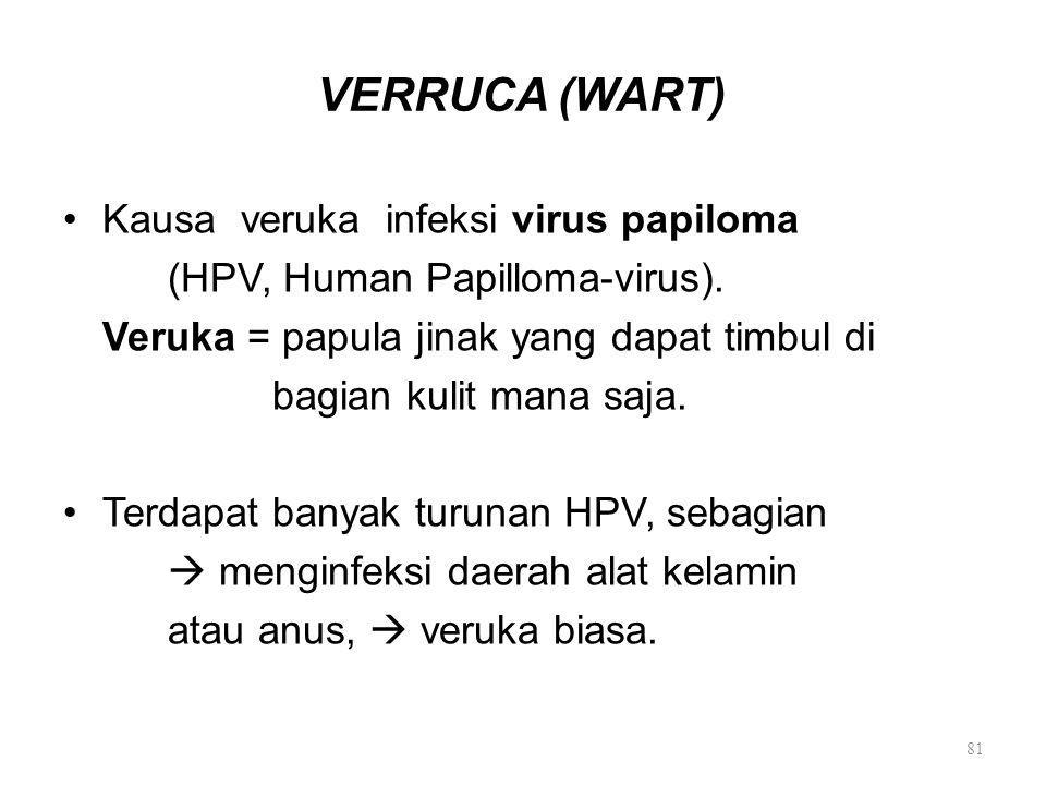 VERRUCA (WART) Kausa veruka infeksi virus papiloma