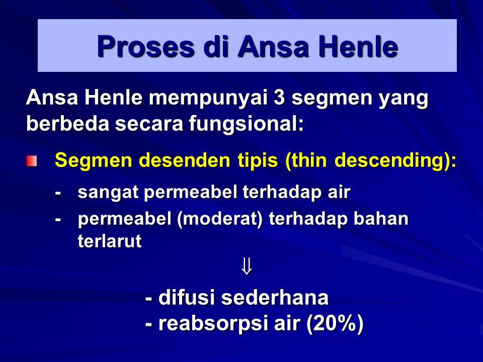 Proses di Ansa Henle Ansa Henle mempunyai 3 segmen yang berbeda secara fungsional: Segmen desenden tipis (thin descending):