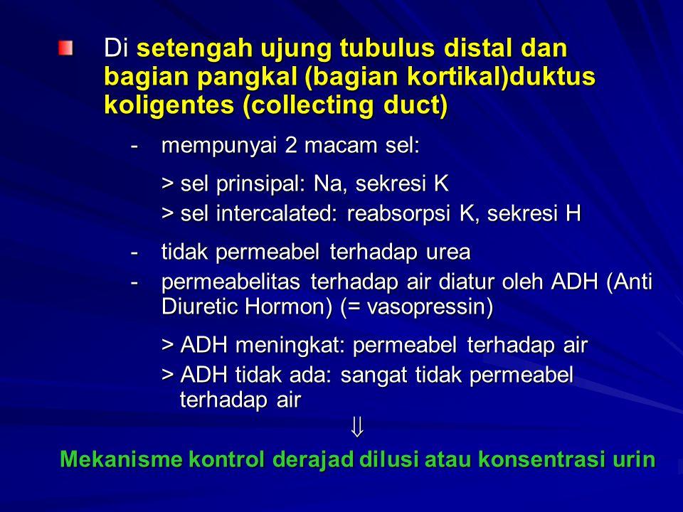 Mekanisme kontrol derajad dilusi atau konsentrasi urin