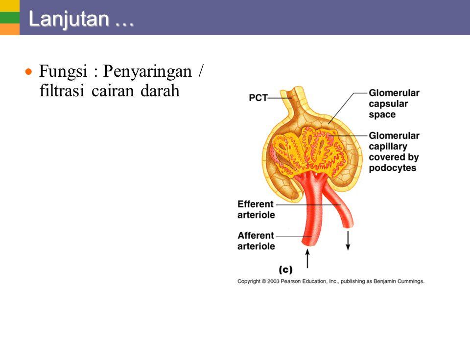 Lanjutan … Fungsi : Penyaringan / filtrasi cairan darah
