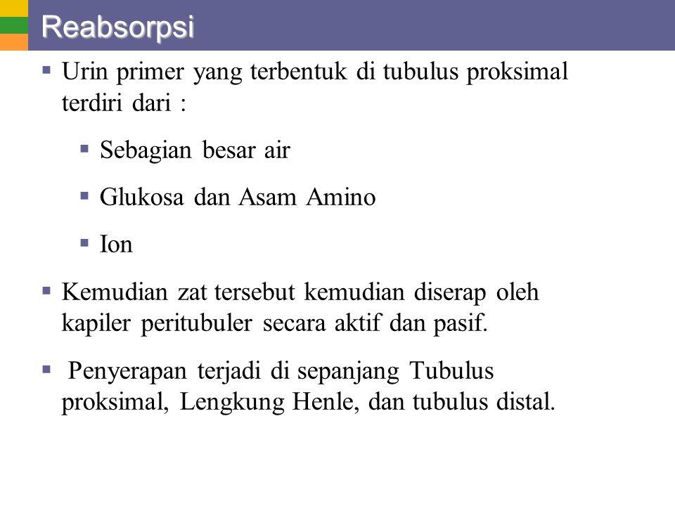 Reabsorpsi Urin primer yang terbentuk di tubulus proksimal terdiri dari : Sebagian besar air. Glukosa dan Asam Amino.