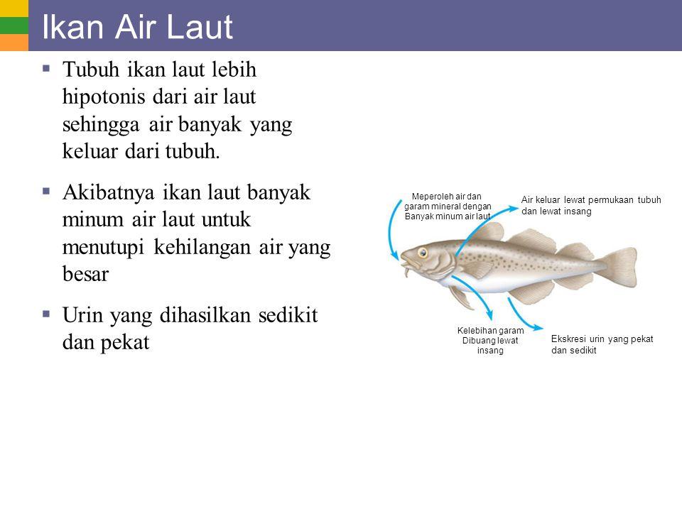 Ikan Air Laut Tubuh ikan laut lebih hipotonis dari air laut sehingga air banyak yang keluar dari tubuh.