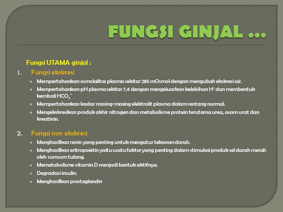 FUNGSI GINJAL … Fungsi UTAMA ginjal : 2. Fungsi non ekskresi