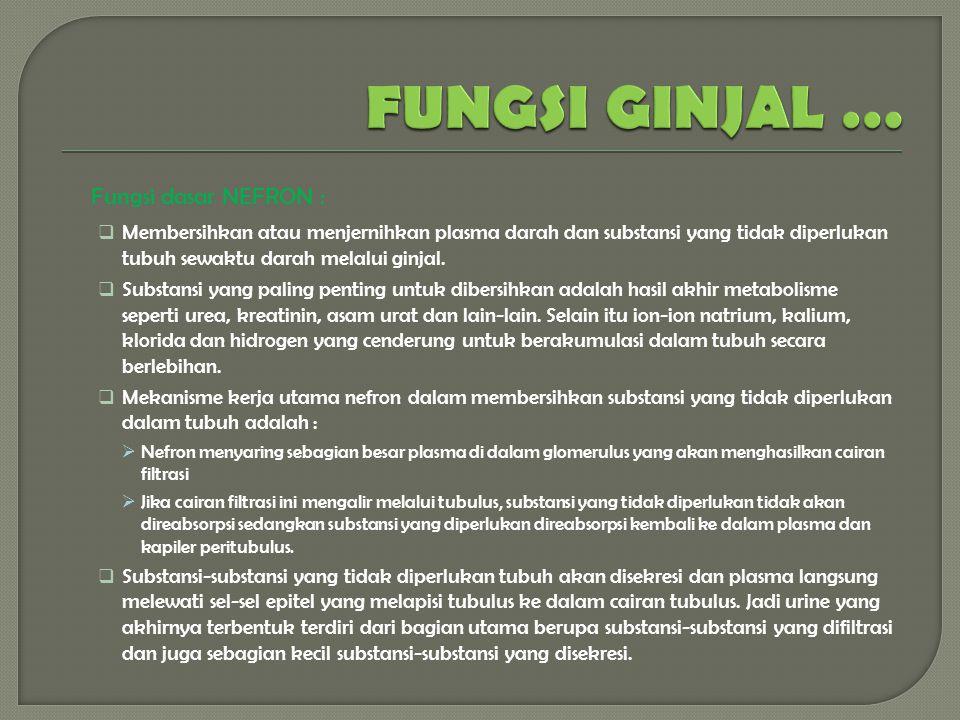 FUNGSI GINJAL … Fungsi dasar NEFRON :