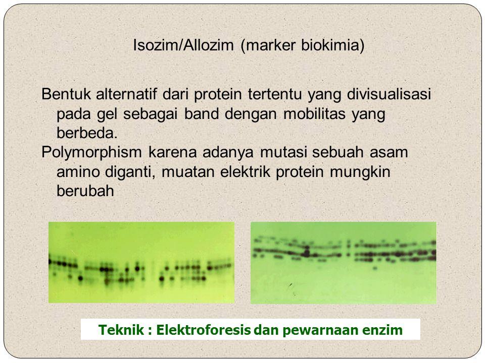 Teknik : Elektroforesis dan pewarnaan enzim