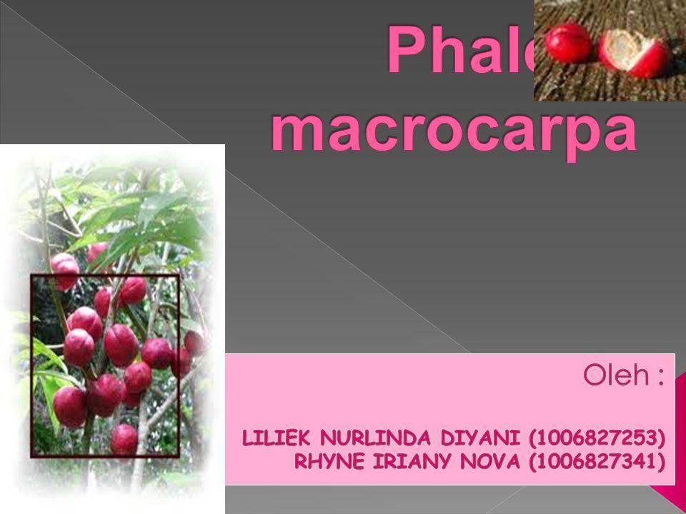 Phaleria macrocarpa Oleh : LILIEK NURLINDA DIYANI (1006827253)